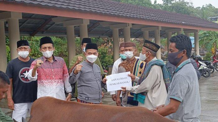 Bantuan Satu Sapi Kurban dari Pemkab Bangka untuk Masjid Agung Sungailiat Akhirnya Tiba