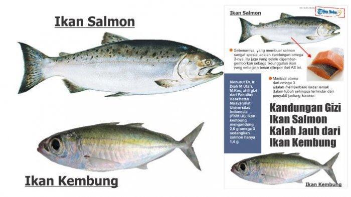 Kandungan Gizi Ikan Kembung Ternyata Jauh Lebih Baik dari Ikan Salmon, Simak Penjelasannya