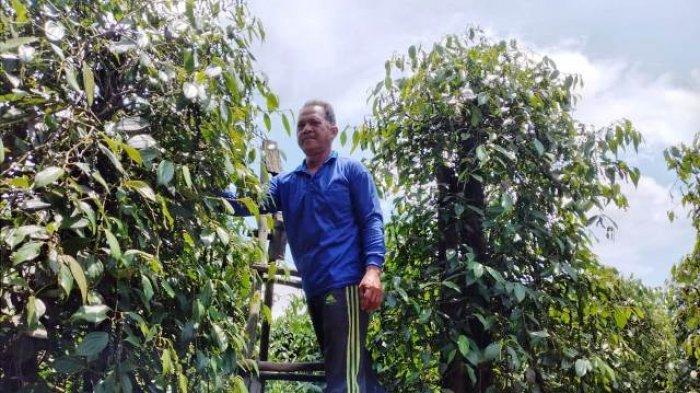 Harga Lada Melambung Lagi, Sistem Resi Gudang Banyak Tak Dipakai Petani, Ternyata Ini Penyebabnya