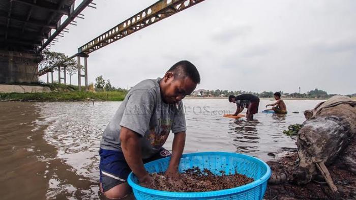 Kekeringan, Petani Mencuci Lada di Sungai Jembatan 12