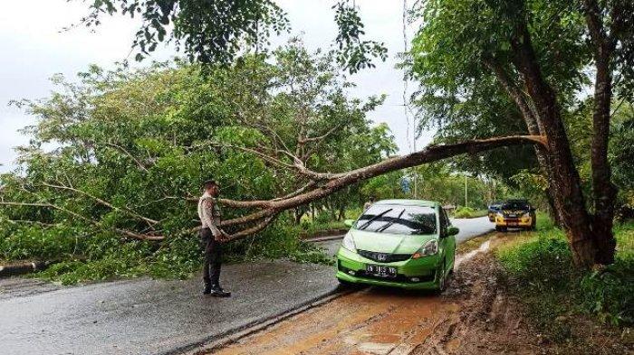 Pohon Tumbang Tutup Jalur Menuju Kantor Bupati Bangka Selatan, Hanya Kendaraan Kecil Bisa Lewat