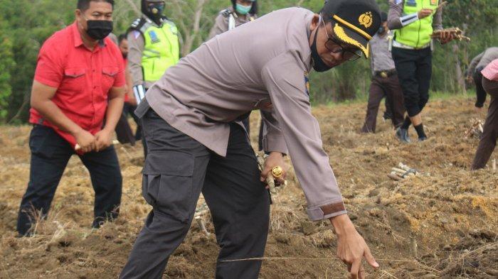 Kapolres Bangka Barat Tabur Bibit Jagung dan Ubi di Lahan Tidur