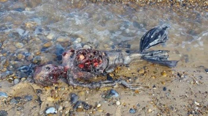VIDEO -- Putri Duyung Ditemukan Membusuk di Pinggir Pantai
