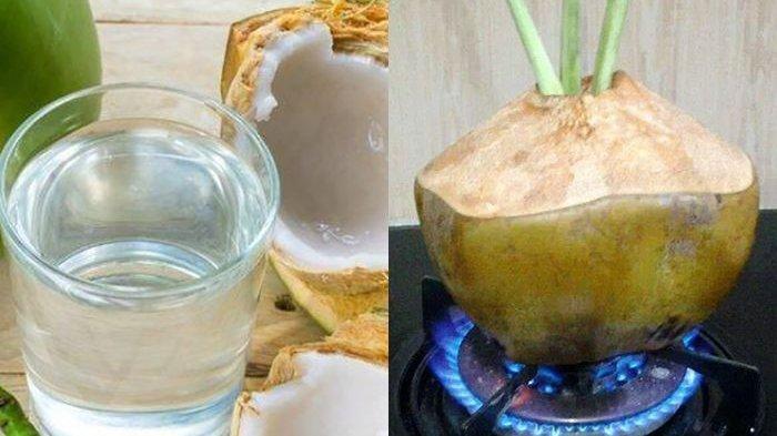 Manfaat Minum Rebusan Air Kelapa Bisa Hindai Tubuh dari Penyakit Mematikan