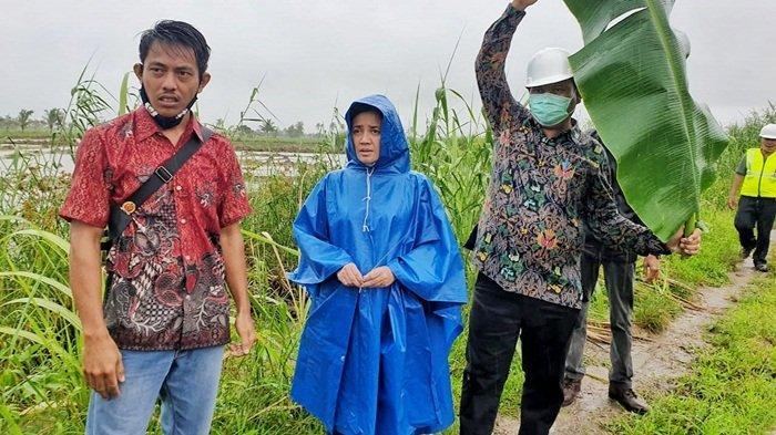 Sawah Rias Terendam Air Laut, Rina Ajak Satker dan Balai Besar Tinjau Lokasi