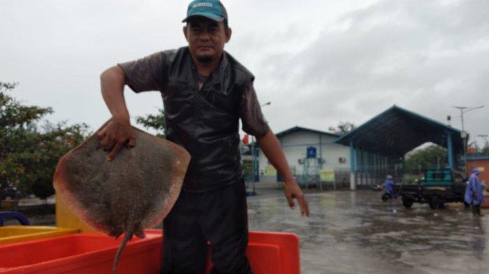 ikan Pari Tanjung hasil tangkapan nelayan