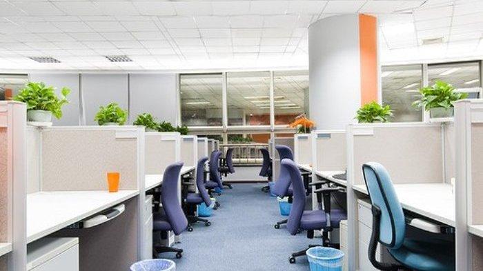 Bisa Tingkatkan Produktivitas, Ini 3 Manfaat Tanaman di Ruang Kerja