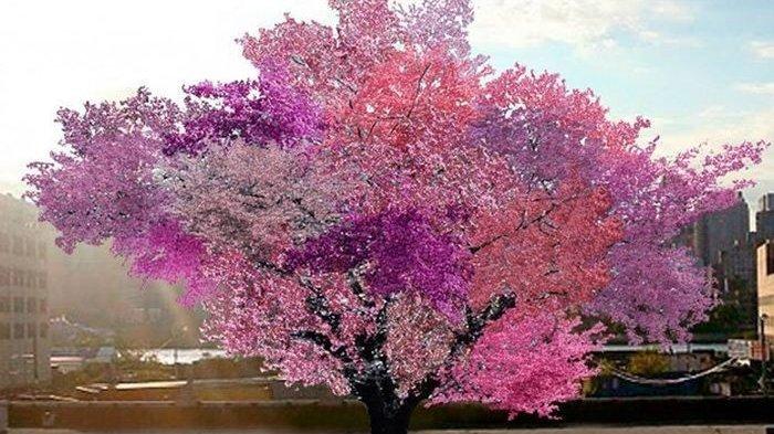 Wow! Pohon Ini Bisa Menghasilkan 40 Buah yang Berbeda, Percaya?