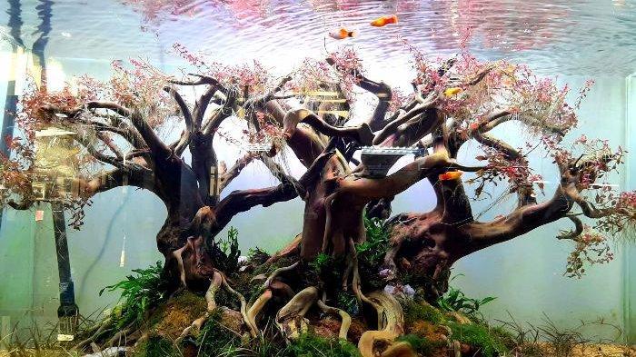 Jernihkan Aquascape, Ini 7 Pilihan Jenis Ikan Pemakan Alga