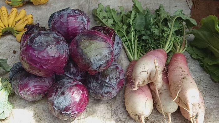 Mengonsumsi Sayuran Berwarna Ungu Bisa Menghambat Sel Kanker, Lo!