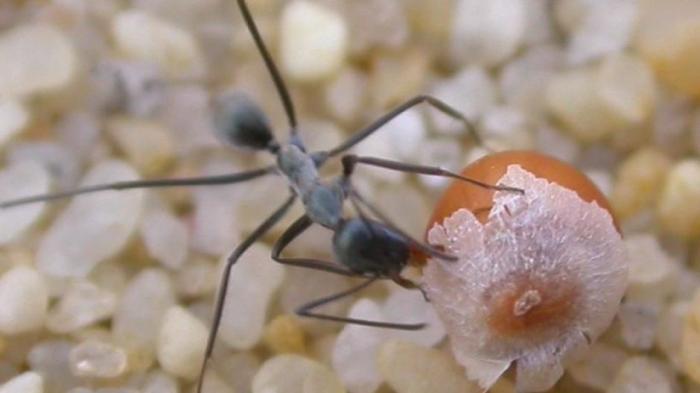Banyak Semut di Dapur, Ini 6 Tips Mencegah dan Mengusirnya