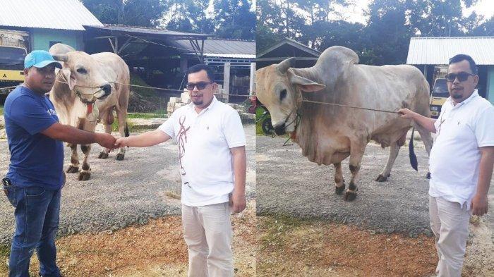Sambut Idul Adha 1442 H, Tokoh Pemuda Andri Berbagi, Bantu Sapi Untuk Masyarakat Desa Sekar Biru