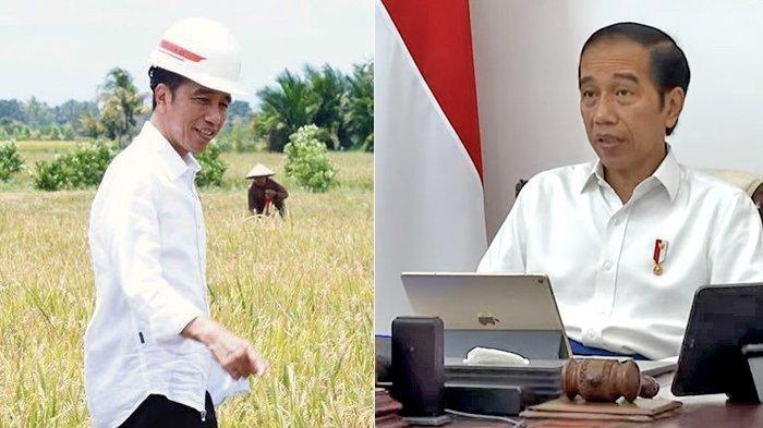 Jokowi Siapkan Food Estate Ratusan Ribu Hektare, Antisipasi Krisis Pangan Akibat Pandemi