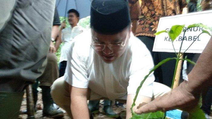 Miliki Wilayah Dataran Rendah, Kopi Robusta Cocok Dikembangkan di Bangka Belitung