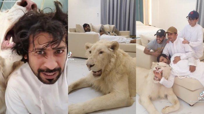 Bukan Pelihara Kucing, Pria Arab Humaid Albuqaish Ini Malah Main Bareng Singa, Segini Harganya