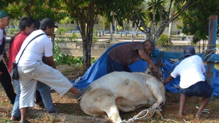 STMIK Atma Luhur Bagikan 170 Bungkus Daging Kurban