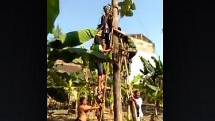 Tentara Turun Tangan Selamatkan Petani Jatuh Tersangkut di Dahan Pohon, Lihat Videonya!