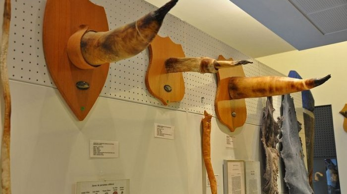 Inilah Museum Mr P Paling Lengkap di Dunia, dari Paling Kecil hingga Besar, Ingat Dilarang Ngeres!