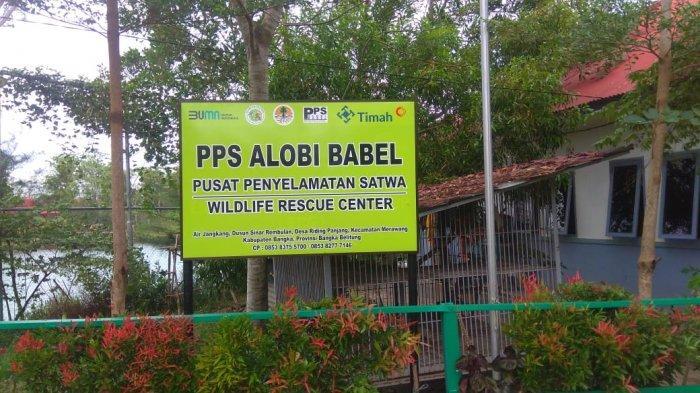 Lembaga Konservasi Pusat Penyelamatan Satwa (PPS) ALOBI di Kawasan Kampoeng Reklamasi Air Jangkang merawat sebanyak 31 ekor buaya di kolong penangkaran buaya