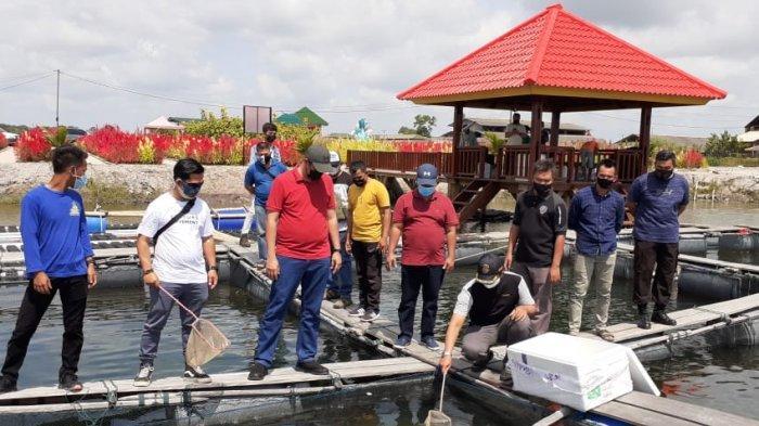 PT Timah Bersama Pokdakan Pesona Cahaya Lestari Budidaya Kakap Putih di Lahan Bekas Tambang