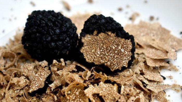 Ilustrasi truffle, jamur termahal di dunia.
