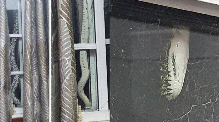 Pasutri ini Terkejut Setengah Mati saat dengar Suara Aneh dari Rumah, Ada yang Merangkak di Jendela