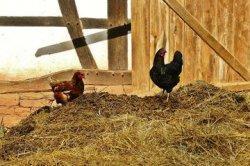Depan Rumahnya Ditembok Tetangga karena Kotoran Ayam, Wisnu Menang di Pengadilan