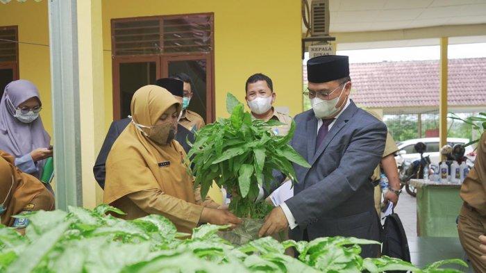 Gubernur Bangka Belitung Panen Bayam Organik, Ini Pesannya untuk Petani