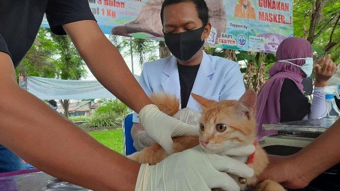 Dinas Pertanian Bangka Tengah Gelar Vaksinasi Massal Hewan Peliharaan demi Bebas dari Rabies
