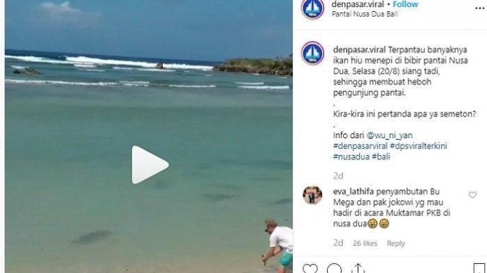 Beredar Video Kawanan Hiu Berenang di Bibir Pantai Nusa Dua Bali