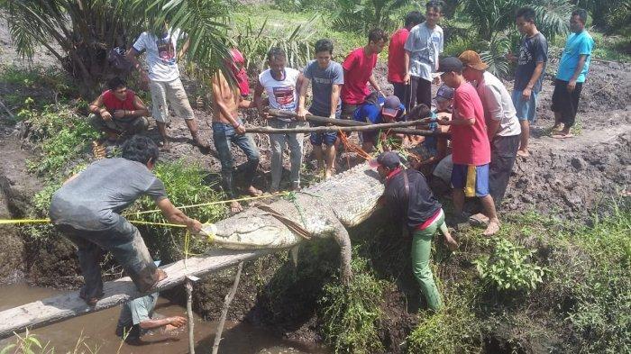 Keunikan Budaya Desa Kayu Besi, Menombak Ikan Hingga Keganasan Buaya Besar Pemangsa Manusia