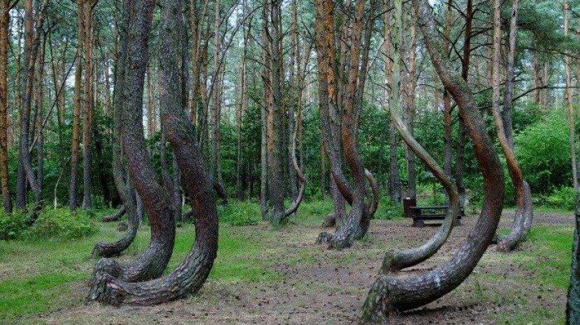 hutan-bengkok-polandia.jpg
