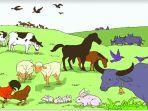 20210728-ilustrasi-perkembangbiakan-hewan.jpg