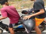 20210911-dua-pria-yang-membawa-lumba-lumba-terdampar-menggunakan-motor.jpg