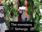20210912-monstera-variegata-besar-dijual-dengan-harga-rp-225-juta.jpg