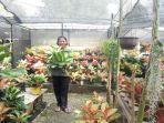 aneka-koleksi-tanaman-milik-dwi-di-taman-asri-valey.jpg<pf>koleksi-tanaman.jpg<pf>indahnya-koleksi-bunga-milik-dwi.jpg<pf>foto-bunga.jpg