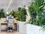 arsitek-ruangan-ini-menempatkan-tanaman-tropis-sebagai-pembatas-antar-divisi.jpg