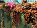 artificial-reef-di-laut-bangka-yang-ditanam-pt-timah-tbkk.jpg