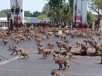 bukan-zombie-6-ribu-monyet-ngamuk-serang-kota-thailand-warga-ketakutan-sembunyi-di-rumah.jpg