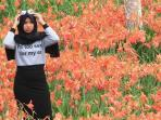 bunga-lily_20151129_091813.jpg