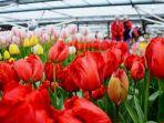 bunga-tulip-khas-belanda_20180408_221226.jpg