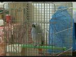 burung-ngaji-i_20171112_160648.jpg
