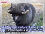 capture-gajah-michael-jackson_20180702_114511.jpg