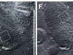 cetakan-kulit-dari-jejak-dinosaurus-ditemukan-di-korea.jpg
