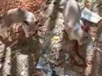 duel-berdarah-kucing-vs-ular.jpg