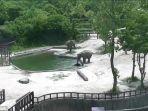 gajah-dewasa-panik_20170622_224739.jpg
