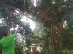 gunawan-hen-alias-kho-minggu-50-menunjukan-pohon-duku-di-belakang-rumahnya_20180218_201026.jpg