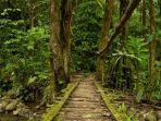 hutan-amazon_20180525_024605.jpg