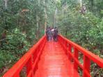 hutan-pelawan-bangka-tengah_20150503_104734.jpg