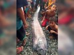 ikan-oarfish_20170220_132038.jpg